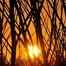 Branches Sunrise - Busselton, Western Australia by Coralie Plozza