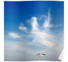 lonely seagull  Poster