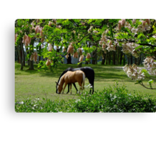 Looking out My Back Door Canvas Print