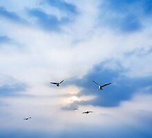 seagulls on sunset by naphotos