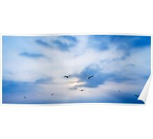 seagulls on sunset Poster