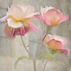 Trinity Roses by Catherine Hamilton-Veal  ©