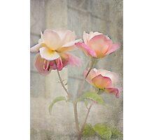 Trinity Roses Photographic Print