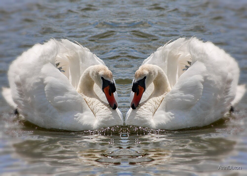 Twin Swans in Gemini by AnnDixon