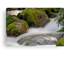 Rainforest gallery, cement creek Canvas Print