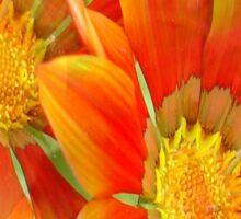 Seamless Vibrant Yellow Gazania Flower Sticker