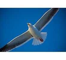 Free On Wings Photographic Print