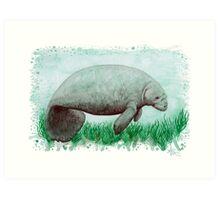 Manatee in Watercolor  Art Print