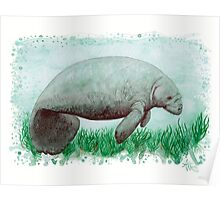 Manatee in Watercolor  Poster