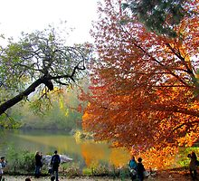 Autumn in Central Park, New York City by Alberto  DeJesus