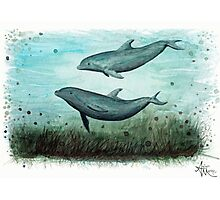 Two Inshore Dolphins Photographic Print
