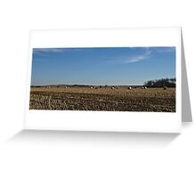 Straw Fields and Prairies Greeting Card