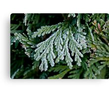 Frost on Hedge Canvas Print