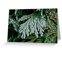Frost on Hedge Greeting Card