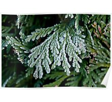 Frost on Hedge Poster