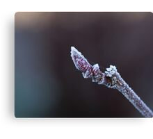 Frost on Winter Bud Canvas Print