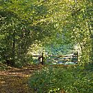 Woodland Path and Gate by Sue Robinson