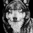 Wolf by Ron  Monroe