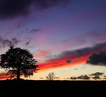 Sunset #2 by Sarah Walters