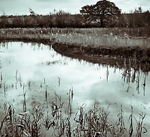 Autumn Ponds by Sarah Walters
