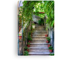 Potted plants and a dog on the steps Canvas Print
