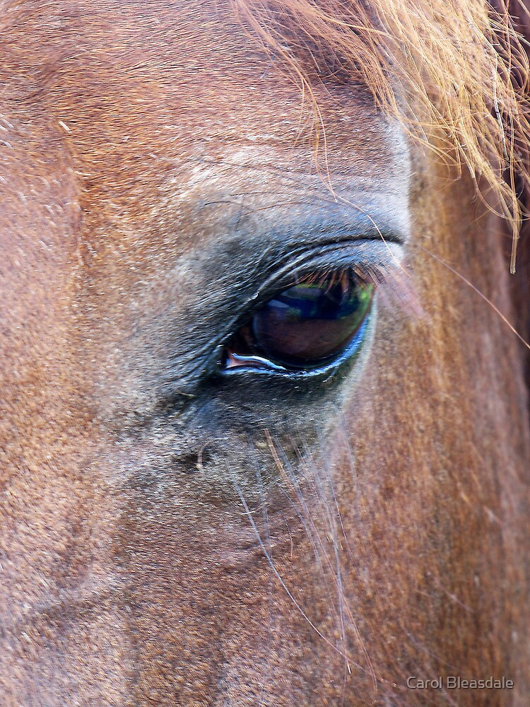 Equus by Carol Bleasdale
