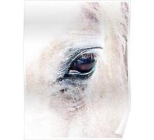 Equus 2 Poster