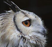 The Owl by DrewWebbPhoto