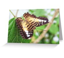 Delicate and Pretty Greeting Card