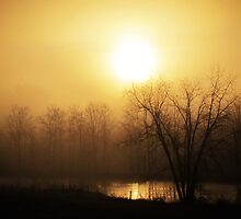 frosty, foggy late autumn sunrise by Stephanie Aughenbaugh