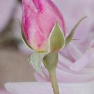 Pink Beauty by Patsy Smiles