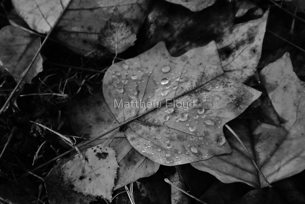 Autumn Leaves - Black and White #4 by Matthew Floyd