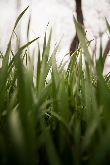 In The Grass by Tim Trott