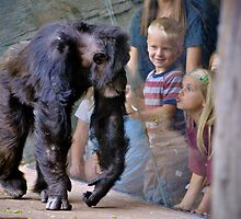 Children at the Zoo by venny