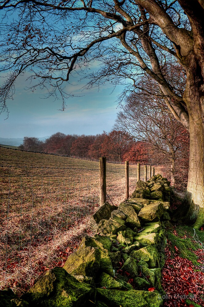 Chevin Dry Stone Wall #2  by Colin Metcalf