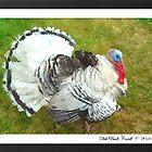 """Talkin Turkey"" by Deb  Badt-Covell"