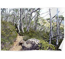 snow gums along the track Poster