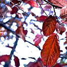 leaves by alexandraliew