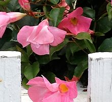 Pink Picket Fence by Juli Lyons
