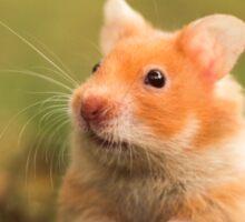 golden hamster pet Sticker