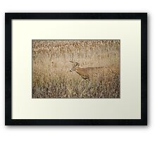 Into View  Framed Print
