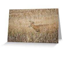 Into View  Greeting Card