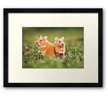 golden hamster pets on lawn Framed Print