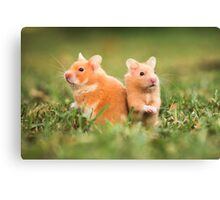 golden hamster pets on lawn Canvas Print
