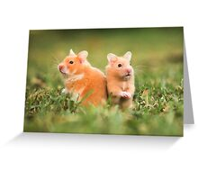 golden hamster pets on lawn Greeting Card