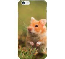 golden hamster pet iPhone Case/Skin
