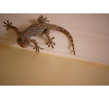 Fabulous Gecko Photographic Print