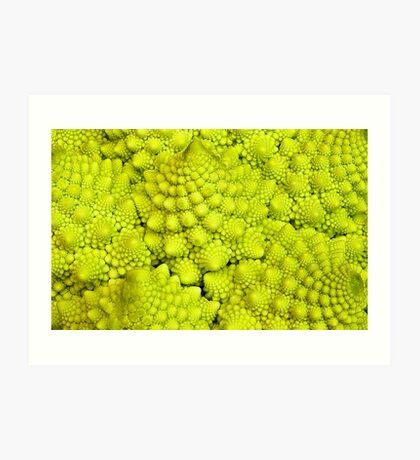 Romanesco Cauliflower Macro Art Print