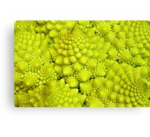 Romanesco Cauliflower Macro Canvas Print