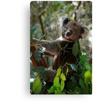Is This The Pose You Wanted? Canvas Print